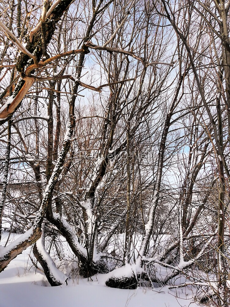 Winter Branches by Raquel O'Neill