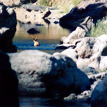 BUCK IN THE WATER by SMOKEYDOGSOCKS