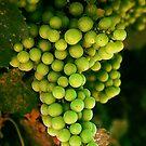 Chardonnay Grapes by Barbara  Brown