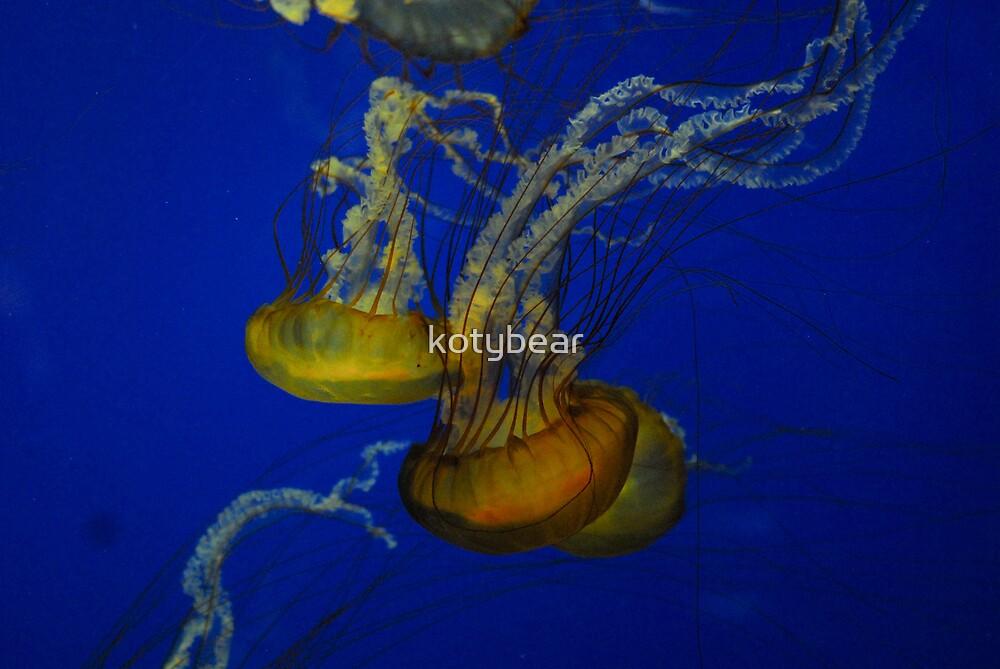 Jellyfish at the Aquarium by kotybear