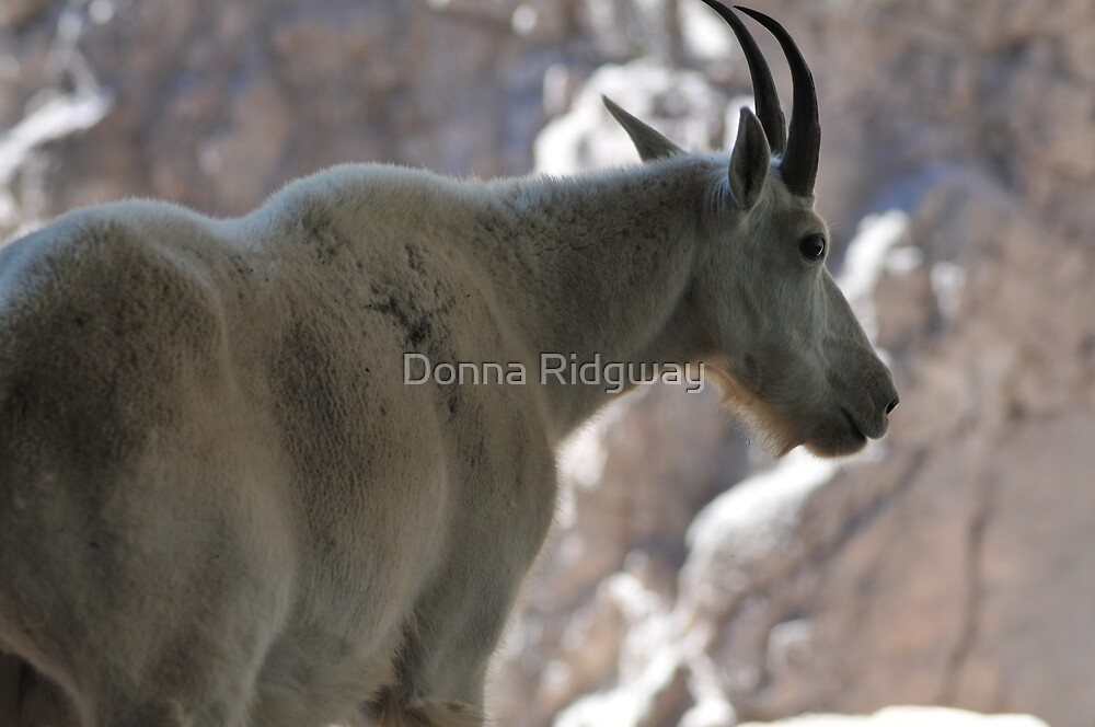 Close to the Goat Herself! by Donna Ridgway