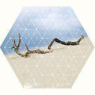 Nature and Geometry - Drift Wood by Denis Marsili