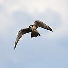 Acrobatic Hobby by kernuak