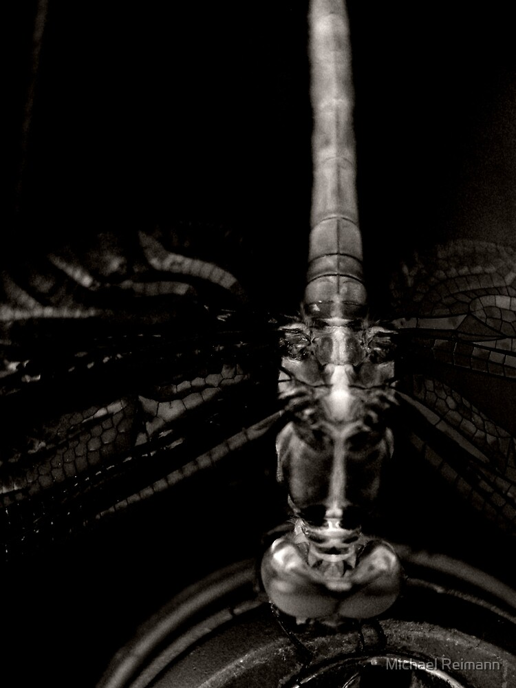 X-Ray Dragonfly by Michael Reimann