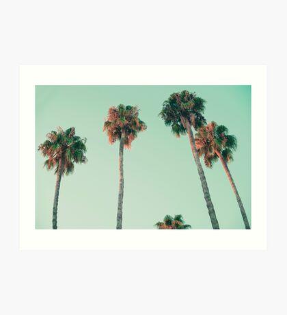 Palmen bei Sonnenuntergang Kunstdruck