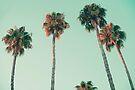 Palmen bei Sonnenuntergang von josemanuelerre