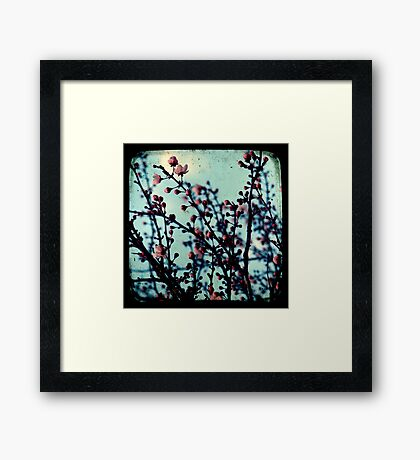 Spring Blossoms Through The Viewfinder - TTV Framed Print