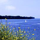 Lake Ontario by Nori Bucci