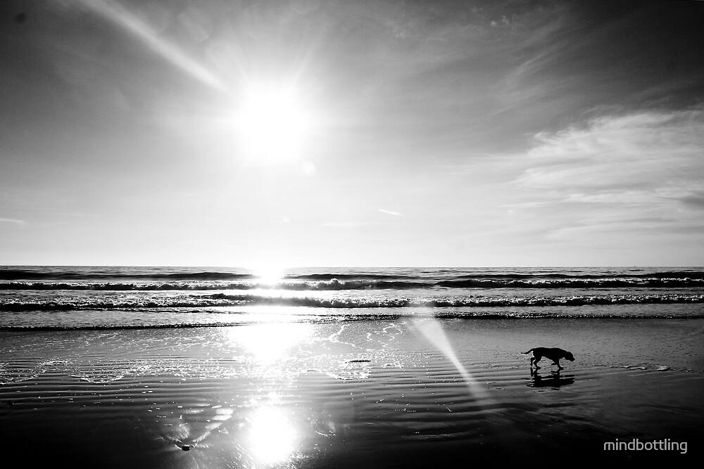 Beach Silhouette by mindbottling