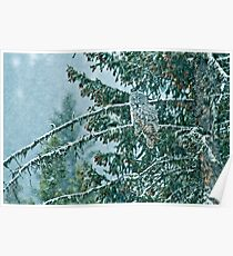 Great Grey Owl in a Snowstorm Poster
