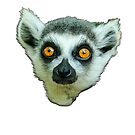 Face of a Ring Tailed Lemur by Dave  Knowles