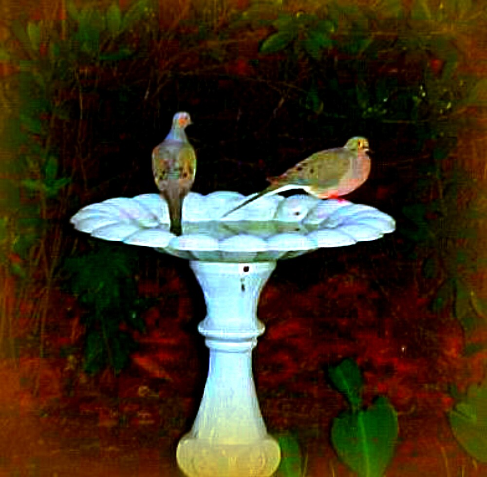 Two Mourning Doves by TerryDavey