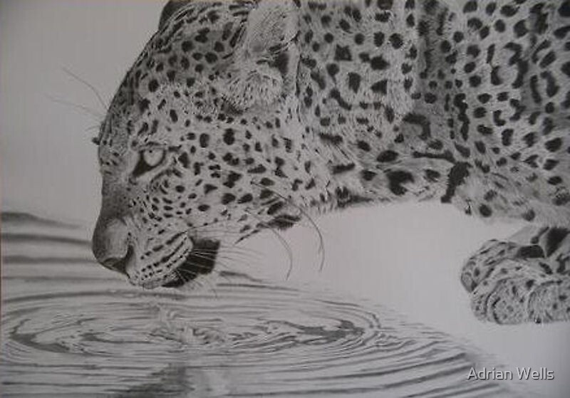 Leopard drinking by Adrian Wells