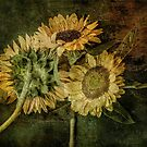 Grungy Sunflowers No. 1 by Barbara Ingersoll