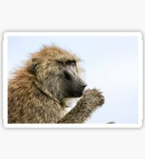 Close-up portrait of an Olive baboon (Papio anubis) Sticker