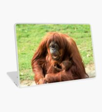 Sumatran orangutan mother with infant In a zoo Laptop Skin