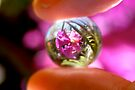 Crystal Ball Purple Orchid by Donell Trostrud
