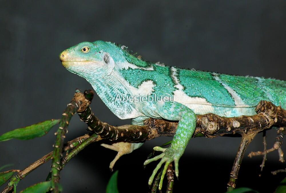 Fijian Iguana by Aussiebluey