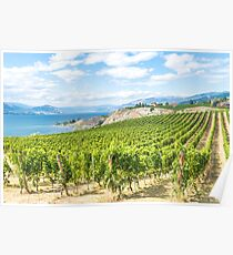 Okanagan Vista - Mountains and Vineyards in Summer Poster
