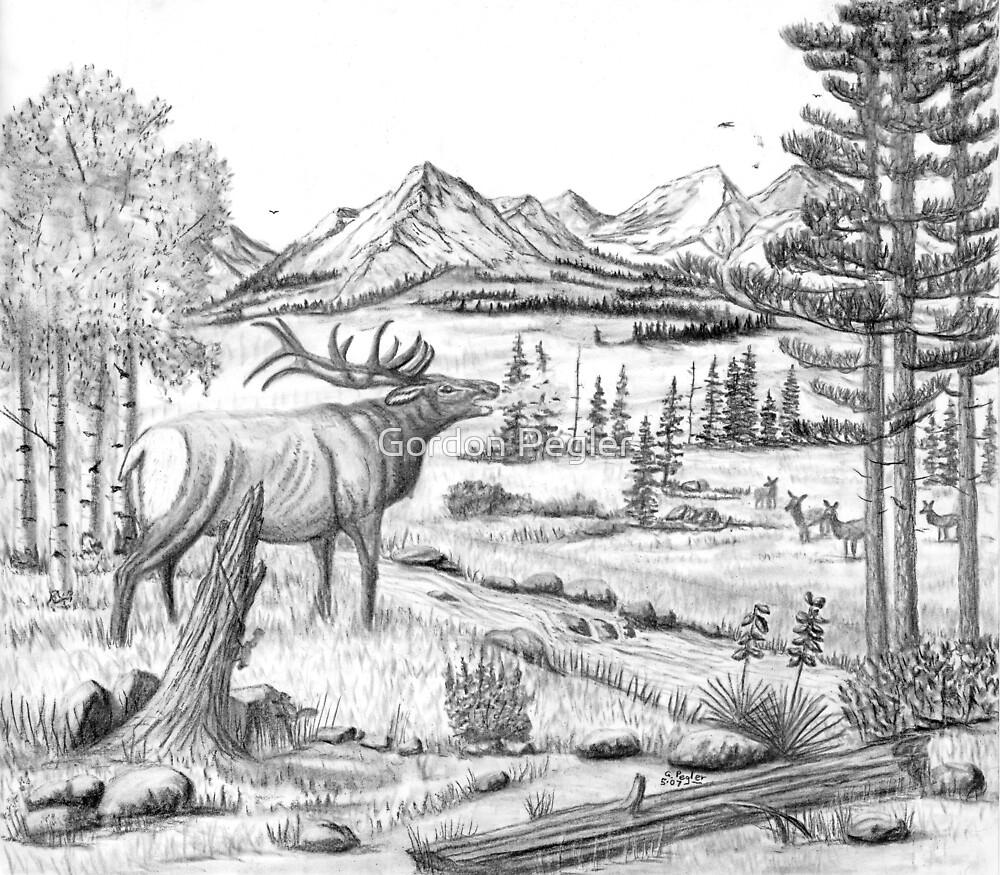Bugling Elk - Charcoal by Gordon Pegler
