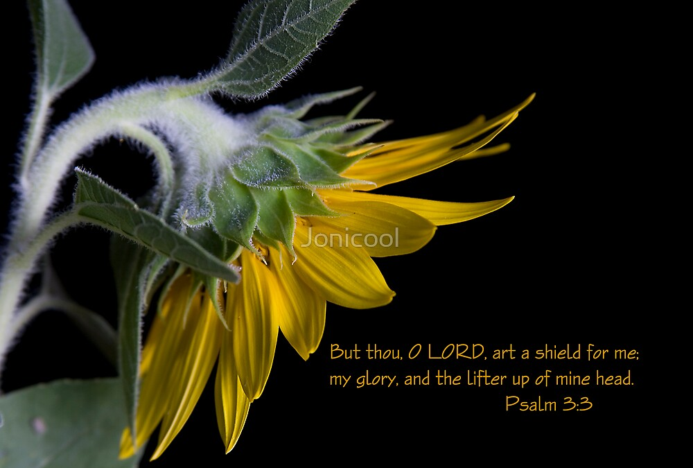 Psalm 3:3 by Jonicool