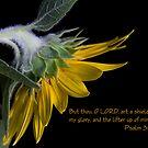 Psalm 3:3 by Jonicool
