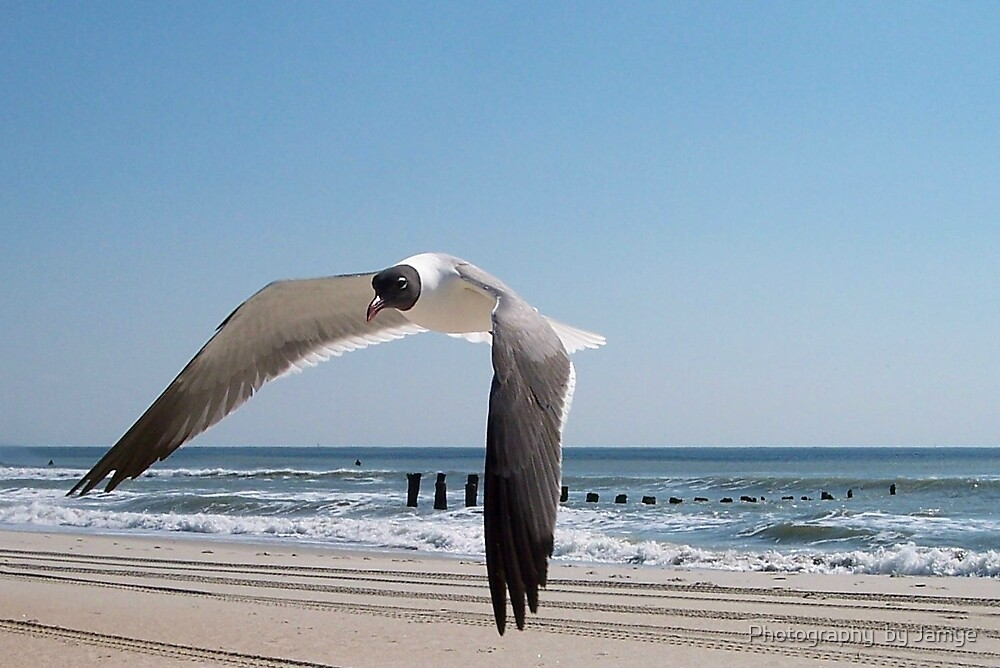 Flying Low by Photography  by Jamye