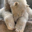 Polar Bear by Anne-Marie Bokslag