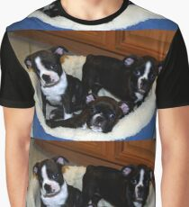 boston terrier puppy group Graphic T-Shirt