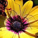 Venomous Flower by Larry Trupp