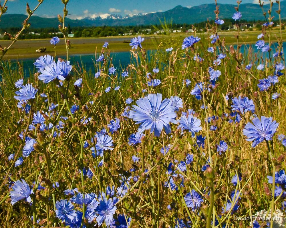 Wild Flowers by David Friederich