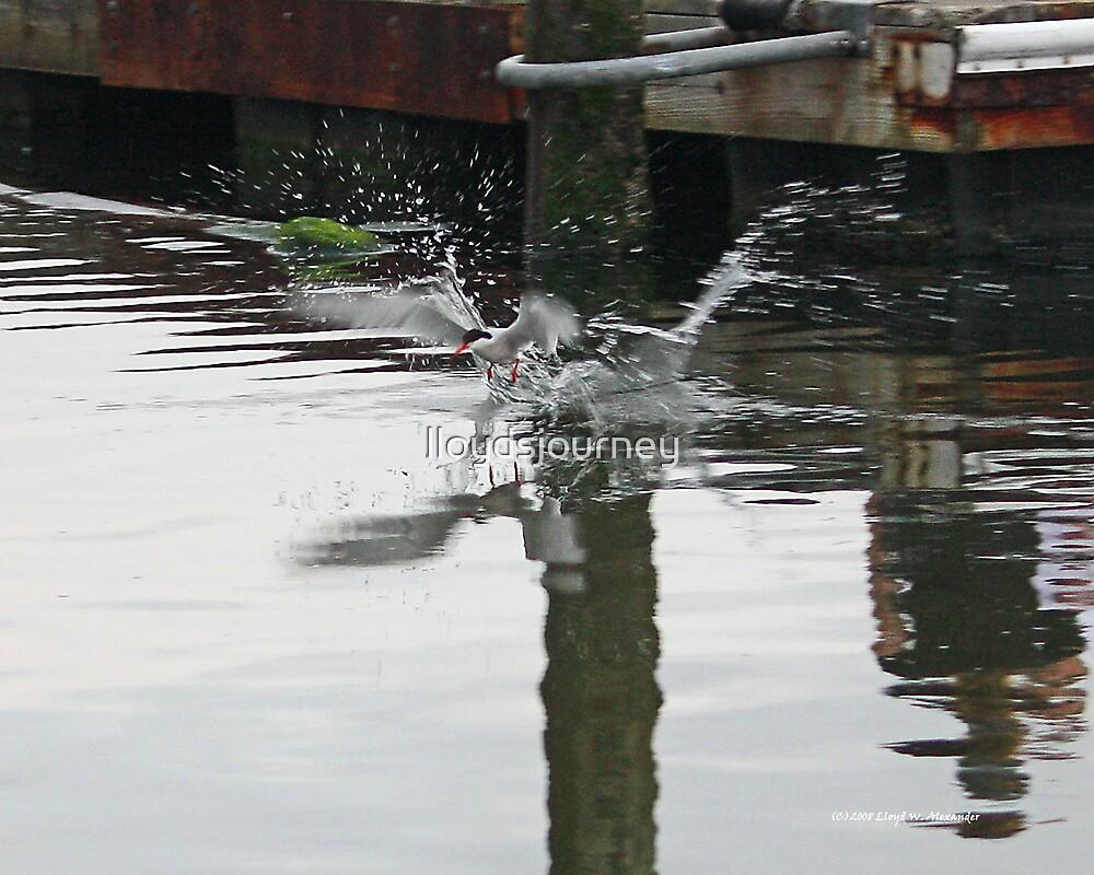 Fishin by lloydsjourney