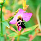 Buzz!! by Catherine Crimmins