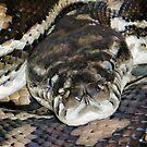 Beautiful Python  by Susanne Schmitz