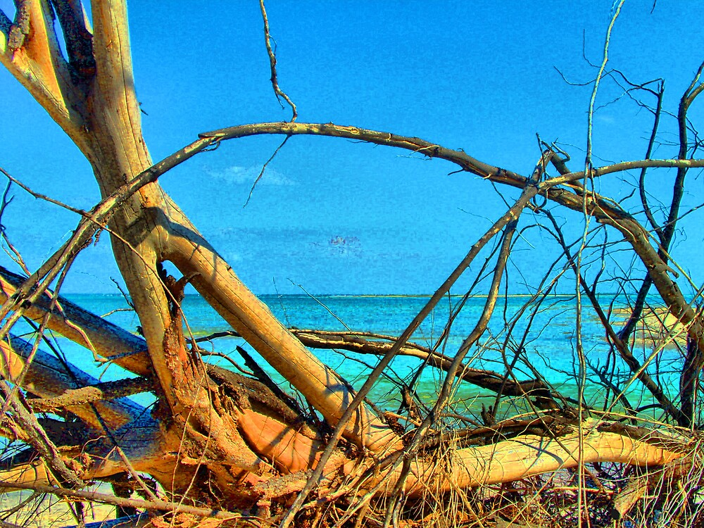 Driftwood by TerryDavey