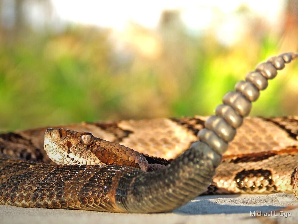 Canebrake Rattlesnake by Michael L Dye