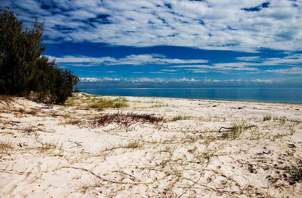 Island Beach by Alecia Scott