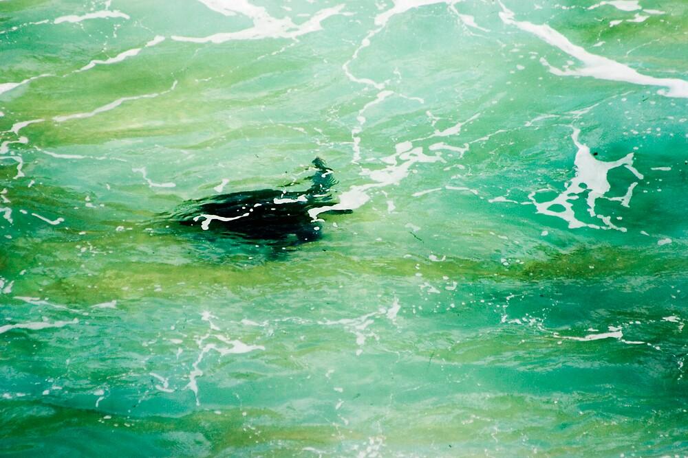 Turtle by Alecia Scott