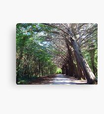 Coole Park forest Canvas Print