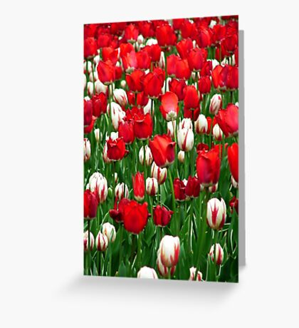 Sea of Tulips Greeting Card