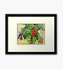 Brush of mountain ash in the rain Framed Print