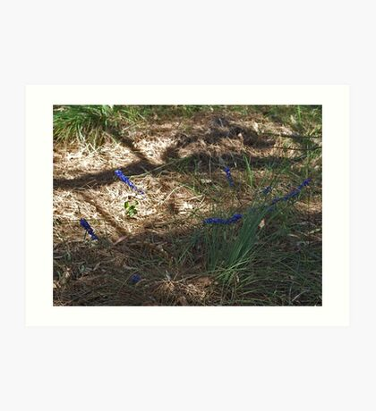 Hovea in the Shadow Art Print