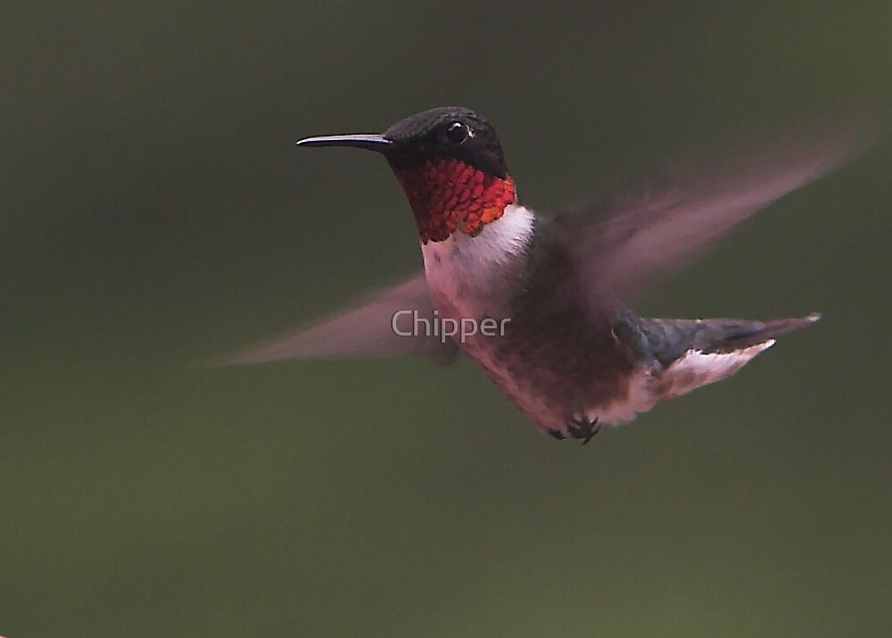 Hummer 1 by Chipper