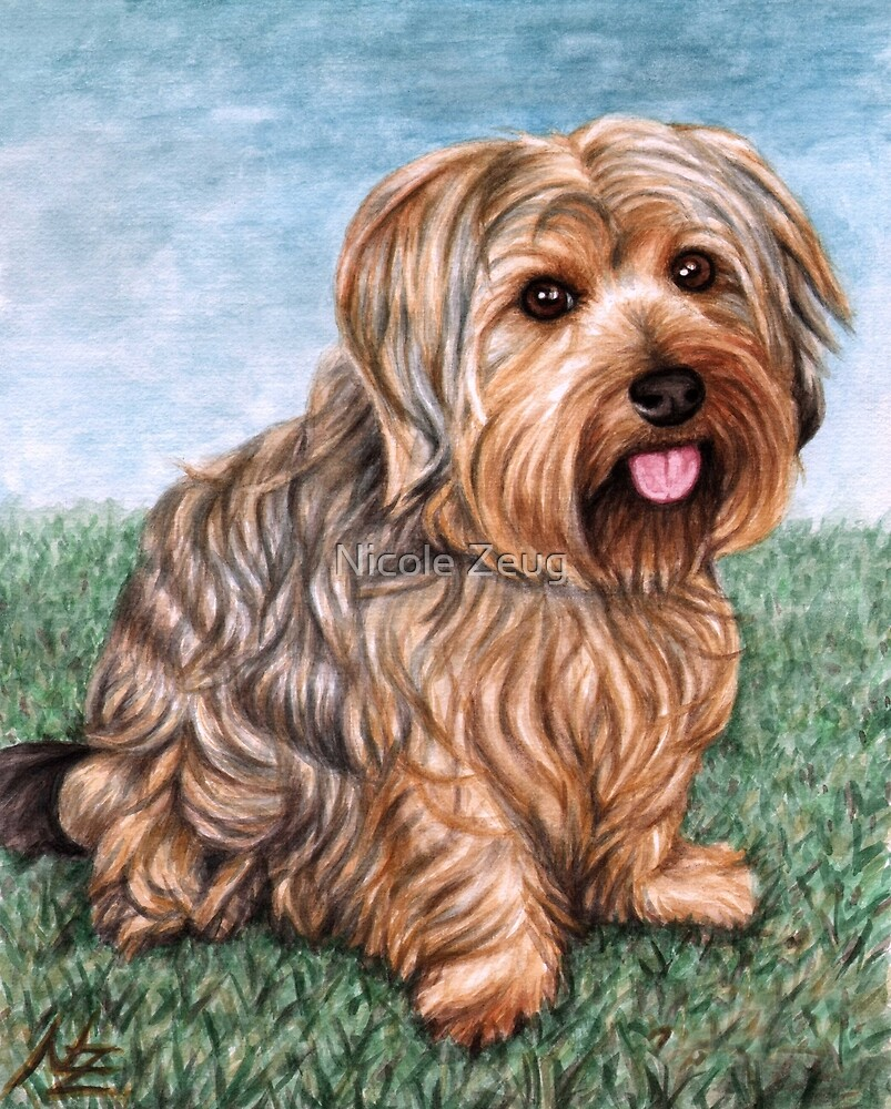 Yorkshire Terrier Mix by Nicole Zeug