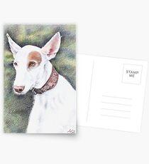 Podenco Ibicenco Postcards