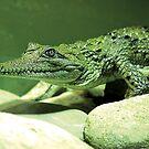 Crocodile by lizart-designs