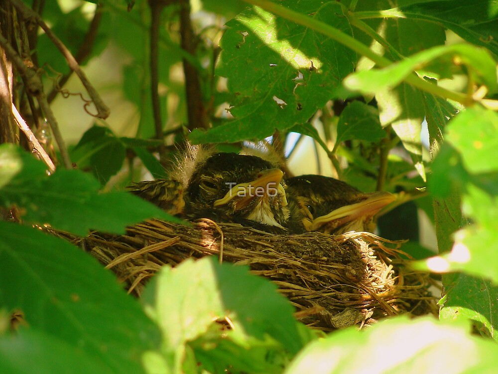 Nest Babies by Tate6