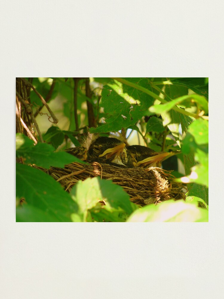 Alternate view of Nest Babies Photographic Print
