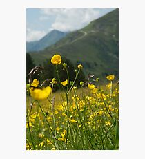 Butterblume Fotodruck