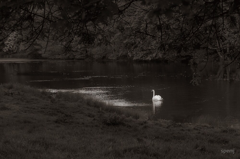 Swan Lake by spemj